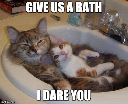 cats in sink | GIVE US A BATH I DARE YOU | image tagged in cats in sink | made w/ Imgflip meme maker