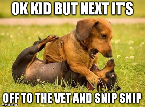 OK KID BUT NEXT IT'S OFF TO THE VET AND SNIP SNIP | made w/ Imgflip meme maker