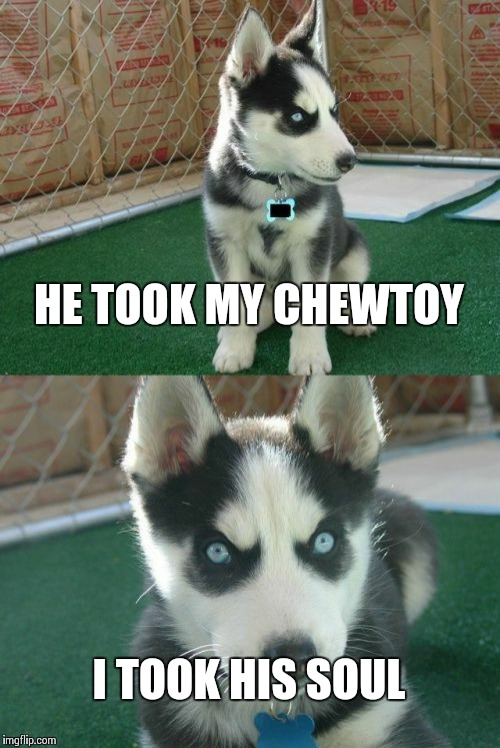 Insanity Puppy Meme | HE TOOK MY CHEWTOY I TOOK HIS SOUL | image tagged in memes,insanity puppy | made w/ Imgflip meme maker