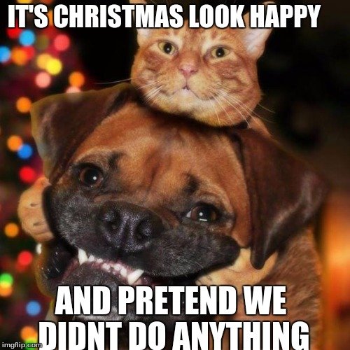Dog Christmas Meme.Dogs An Cats Imgflip