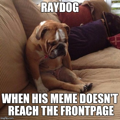 sad dog | RAYDOG WHEN HIS MEME DOESN'T REACH THE FRONTPAGE | image tagged in sad dog | made w/ Imgflip meme maker