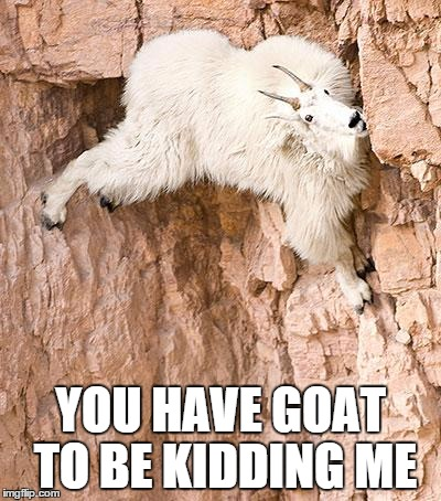 mountain goat | YOU HAVE GOAT TO BE KIDDING ME | image tagged in mountain goat | made w/ Imgflip meme maker