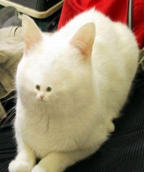 Mačka - Stránka 8 Uo4if
