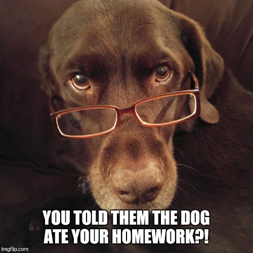 The dog ate your homework  | YOU TOLD THEM THE DOG ATE YOUR HOMEWORK?! | image tagged in chuckie the chocolate lab,homework,funny memes,glasses,dog,labrador | made w/ Imgflip meme maker