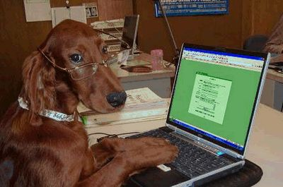 Dog with Glasses on Computer Blank Template - Imgflip