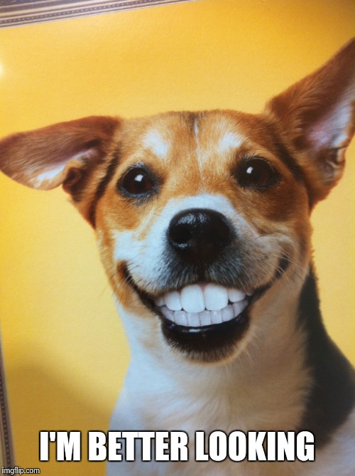 Dog Grinning | I'M BETTER LOOKING | image tagged in dog grinning | made w/ Imgflip meme maker