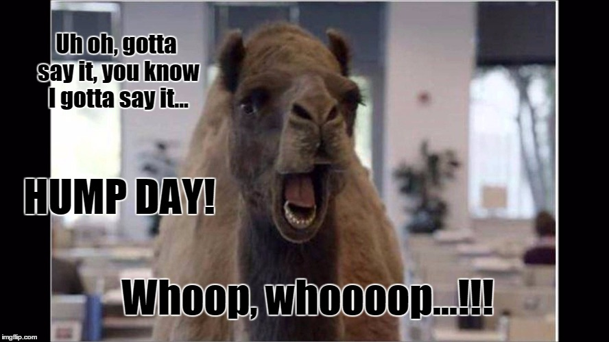 Hump Day | Uh oh, gotta say it, you know I gotta say it... HUMP DAY! Whoop, whoooop...!!! | image tagged in camel,hump day | made w/ Imgflip meme maker