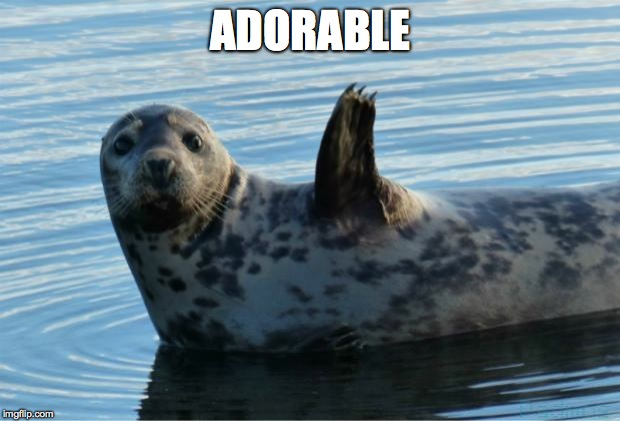Seal | ADORABLE | image tagged in seal | made w/ Imgflip meme maker