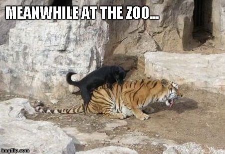 MEANWHILE AT THE ZOO... | made w/ Imgflip meme maker