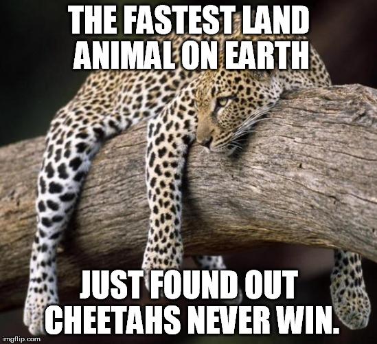Cheetah Imgflip
