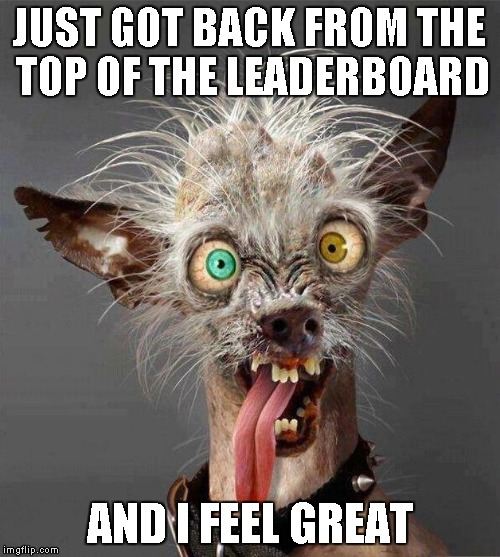 Big SHOUT OUT to the Imgflip community for helping me to be there. Thank you ALL. | JUST GOT BACK FROM THE TOP OF THE LEADERBOARD AND I FEEL GREAT | image tagged in ugly dog,dog,funny animals,funny | made w/ Imgflip meme maker