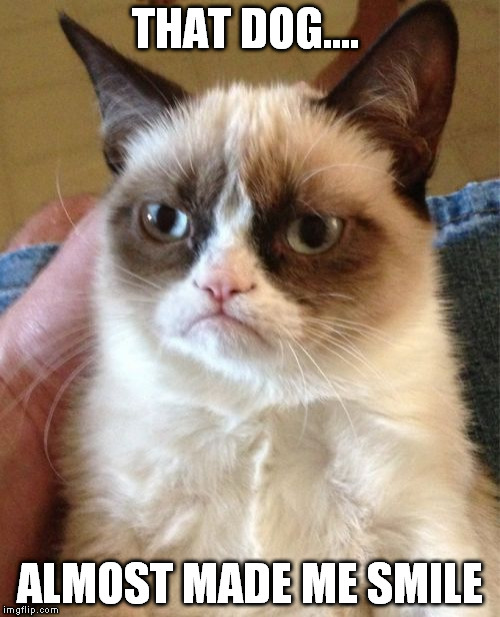 Grumpy Cat Meme | THAT DOG.... ALMOST MADE ME SMILE | image tagged in memes,grumpy cat | made w/ Imgflip meme maker