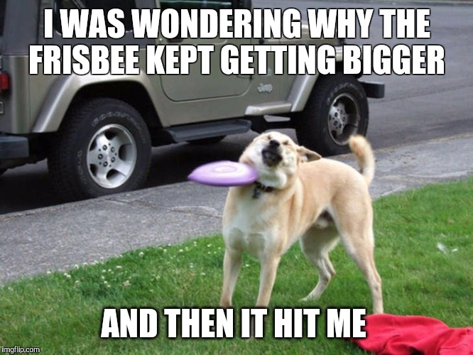Crap Frisbee dog  | I WAS WONDERING WHY THE FRISBEE KEPT GETTING BIGGER AND THEN IT HIT ME | image tagged in crap frisbee dog,dog,frisbee,catch,fail,epic fail | made w/ Imgflip meme maker