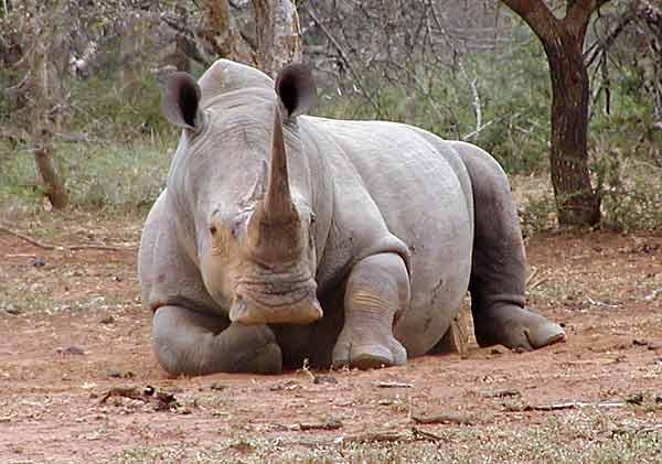 sad rhino blank template imgflip