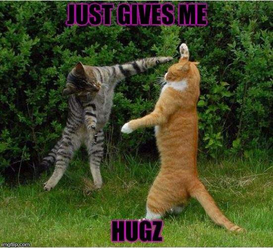 Cat Fight | JUST GIVES ME HUGZ | image tagged in cat fight | made w/ Imgflip meme maker