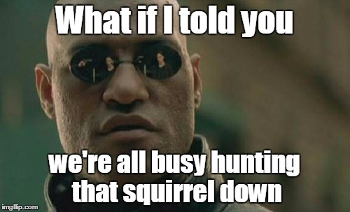 Matrix Morpheus Meme | What if I told you we're all busy hunting that squirrel down | image tagged in memes,matrix morpheus | made w/ Imgflip meme maker