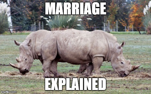 Funny Memes Marriage : Image tagged in memes meme marriage funny animals morph imgflip