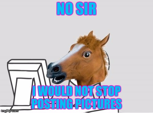 Computer Horse | NO SIR I WOULD NOT STOP POSTING PICTURES | image tagged in memes,computer horse | made w/ Imgflip meme maker