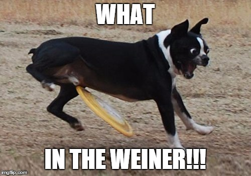 WHAT IN THE WEINER!!! | image tagged in dog nooooo | made w/ Imgflip meme maker