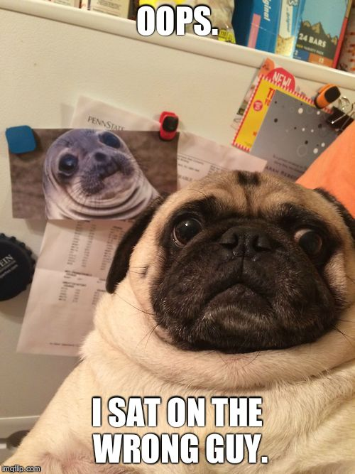 Awkward moment pug | OOPS. I SAT ON THE WRONG GUY. | image tagged in awkward moment pug | made w/ Imgflip meme maker