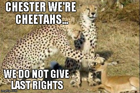 When you feel sorry for your food. | CHESTER WE'RE CHEETAHS... WE DO NOT GIVE LAST RIGHTS | image tagged in cheetah pet,funny animals,cheetah,cats,funny | made w/ Imgflip meme maker