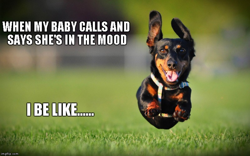 v1pd8 dog running meme generator imgflip,Dog Running Meme