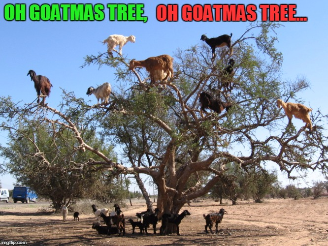 Thy leaves are being eaten | OH GOATMAS TREE, OH GOATMAS TREE... | image tagged in memes,goat,goats | made w/ Imgflip meme maker