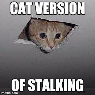 Ceiling Cat Meme | CAT VERSION OF STALKING | image tagged in ceiling cat | made w/ Imgflip meme maker