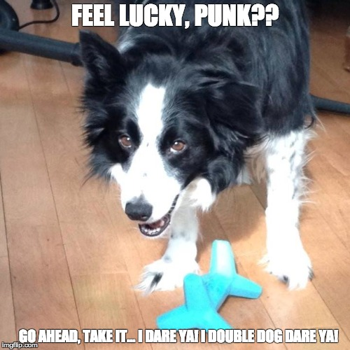 Clint Beastwood | FEEL LUCKY, PUNK?? GO AHEAD, TAKE IT... I DARE YA! I DOUBLE DOG DARE YA! | image tagged in border collie,punk,funny dogs,clint eastwood | made w/ Imgflip meme maker