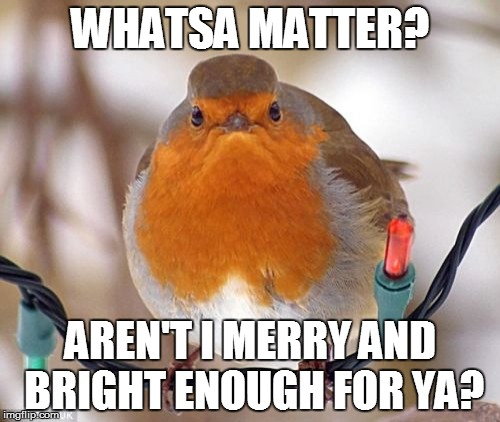 Who Needs Lights? | WHATSA MATTER? AREN'T I MERRY AND BRIGHT ENOUGH FOR YA? | image tagged in memes,bah humbug,birds,christmas | made w/ Imgflip meme maker