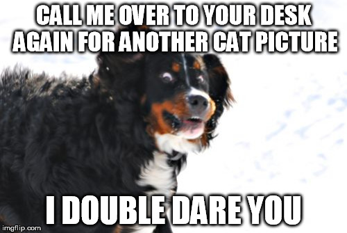 Crazy Dawg Meme | CALL ME OVER TO YOUR DESK AGAIN FOR ANOTHER CAT PICTURE I DOUBLE DARE YOU | image tagged in memes,crazy dawg | made w/ Imgflip meme maker