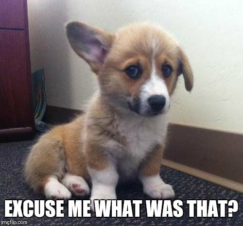Cute Puppy | EXCUSE ME WHAT WAS THAT? | image tagged in cute puppy | made w/ Imgflip meme maker