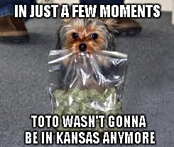 IN JUST A FEW MOMENTS TOTO WASN'T GONNA BE IN KANSAS ANYMORE | made w/ Imgflip meme maker