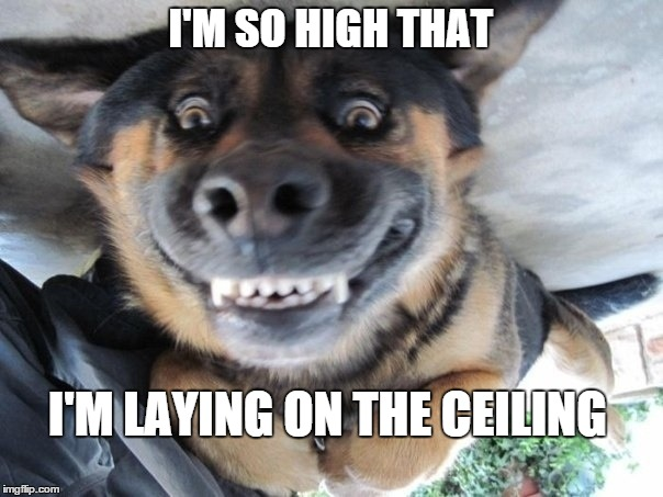 I'M SO HIGH THAT I'M LAYING ON THE CEILING | made w/ Imgflip meme maker