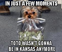 He's off to see the wizard... | IN JUST A FEW MOMENTS TOTO WASN'T GONNA BE IN KANSAS ANYMORE | image tagged in toto,pot dog,funny,funny dog,funny animals | made w/ Imgflip meme maker