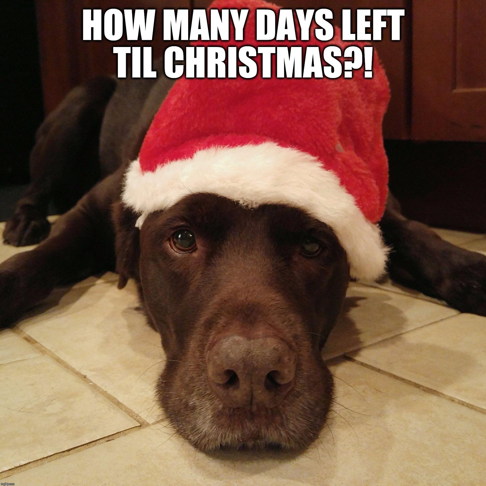 How Many Days Till Christmas Meme.How Many Days Til Christmas Imgflip