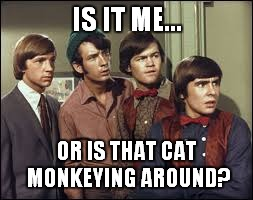 IS IT ME... OR IS THAT CAT MONKEYING AROUND? | made w/ Imgflip meme maker