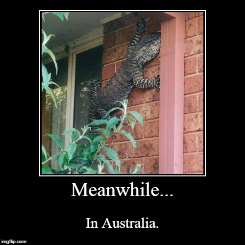 Just a friendly Gecko. | Meanwhile... | In Australia. | image tagged in funny,demotivationals | made w/ Imgflip demotivational maker