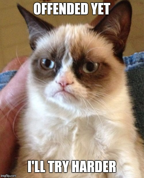 Grumpy Cat Meme | OFFENDED YET I'LL TRY HARDER | image tagged in memes,grumpy cat | made w/ Imgflip meme maker