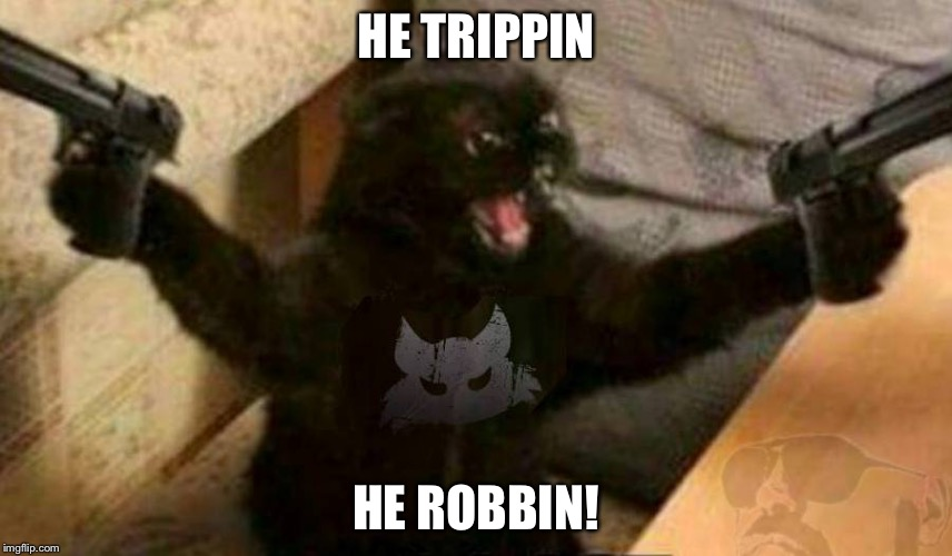 Image Tagged In Angry Cat Imgflip