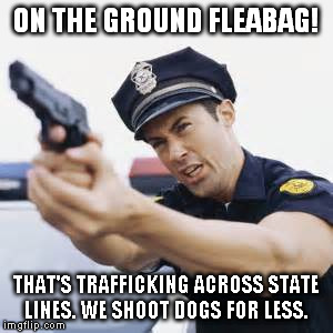 ON THE GROUND FLEABAG! THAT'S TRAFFICKING ACROSS STATE LINES. WE SHOOT DOGS FOR LESS. | made w/ Imgflip meme maker