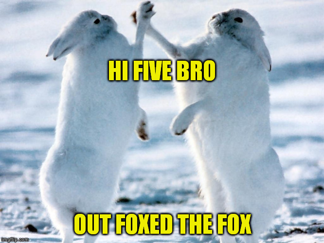 Staying Alive | HI FIVE BRO OUT FOXED THE FOX | image tagged in meme,nature,survival | made w/ Imgflip meme maker