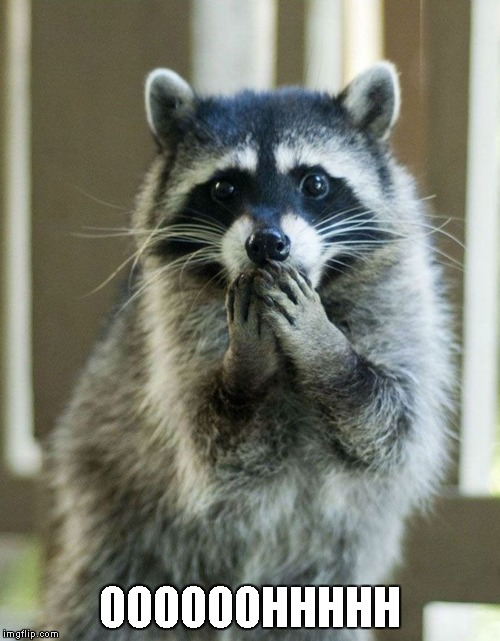 evil plotting raccoon meme   imgflip