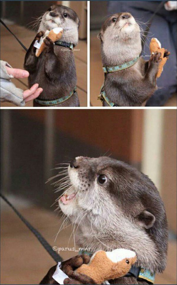 I Said Good Day Sir Otter Meme Generator Imgflip