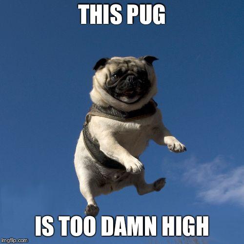 flying pug imgflip