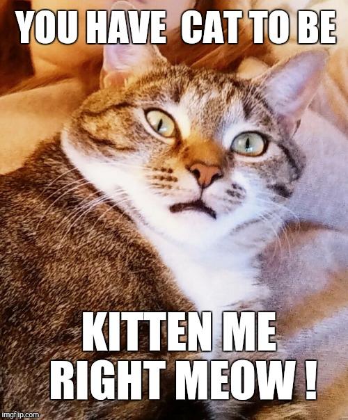 tom cat spraying blood