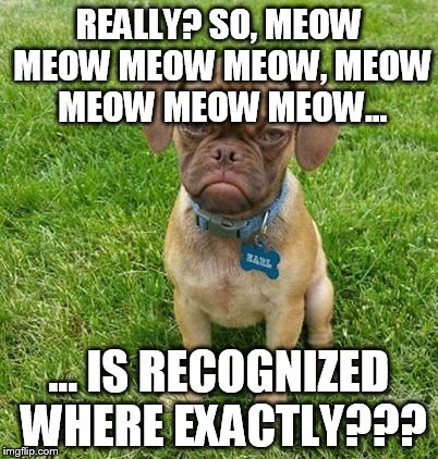 REALLY? SO, MEOW MEOW MEOW MEOW, MEOW MEOW MEOW MEOW... ... IS RECOGNIZED WHERE EXACTLY??? | made w/ Imgflip meme maker