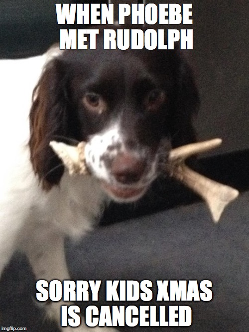 Xmas cancelled | WHEN PHOEBE MET RUDOLPH SORRY KIDS XMAS IS CANCELLED | image tagged in rudolph,christmas,cancel,xmas | made w/ Imgflip meme maker