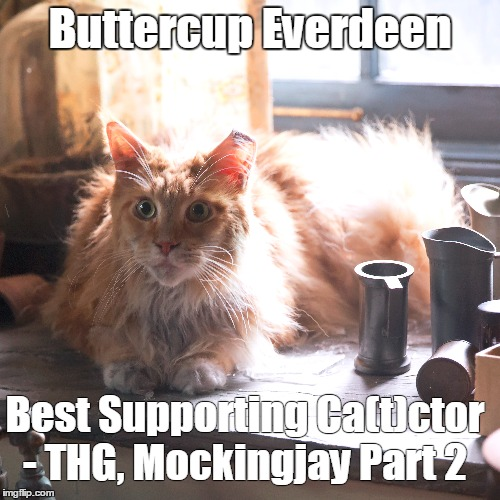 Best Supporting Ca(t)ctor for the scene where Katniss loses it and yells at Buttercup. | Buttercup Everdeen Best Supporting Ca(t)ctor - THG, Mockingjay Part 2 | image tagged in buttercup,hunger games | made w/ Imgflip meme maker