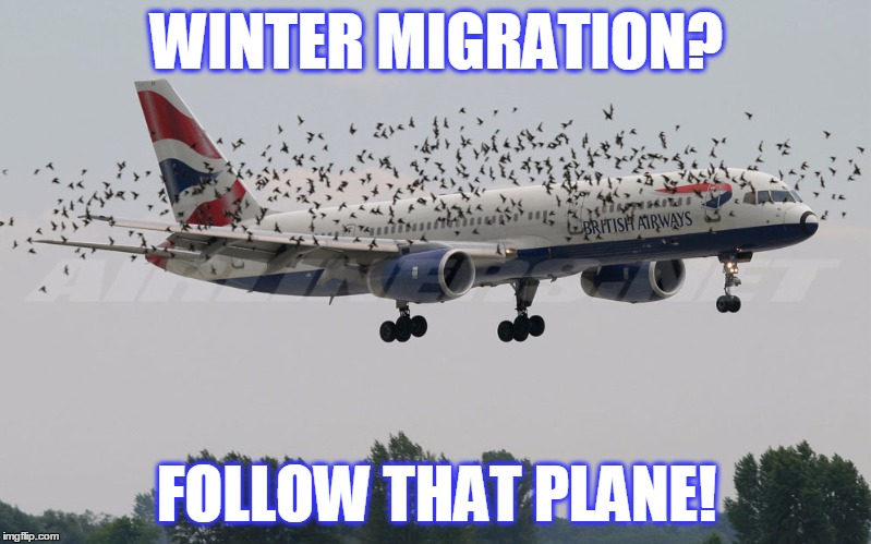 WINTER MIGRATION? FOLLOW THAT PLANE! | made w/ Imgflip meme maker